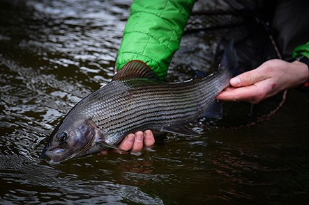 winter-grayling-fishing-break